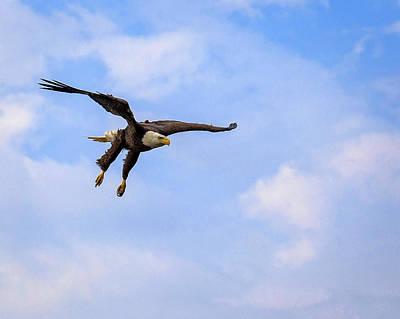 Photograph - Inbound Eagle by Alan Raasch