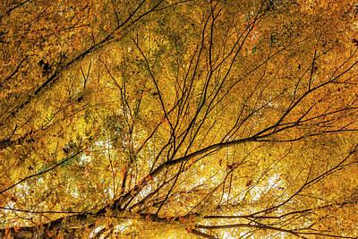 Photograph - Incandescence by Belinda Greb