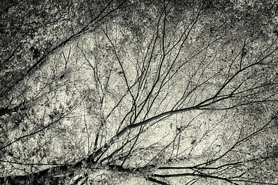 Photograph - Incandescence Bw Ambro by Belinda Greb