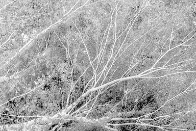 Photograph - Incandescence Bw Inv by Belinda Greb