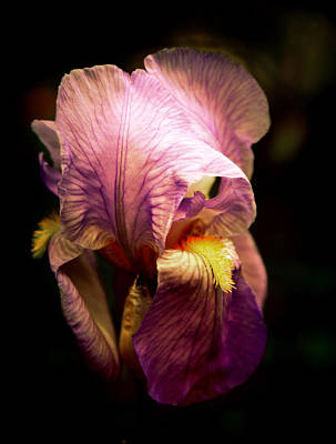 Macro Digital Art - Incandescent Iris by Jessica Jenney