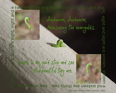 Photograph - Inchworm by Lori Kingston