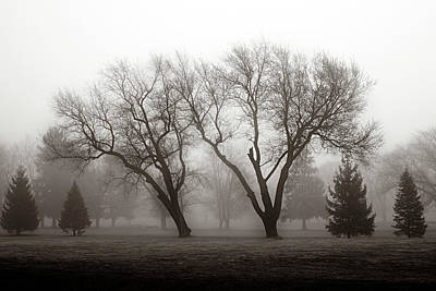 Photograph - Waltzing Trees by Denise Harrison
