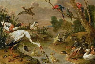 Including Painting - Including Ducks, Parrots And A Heron by Adriaen van Utrecht
