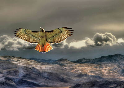 Red Tail Hawks Photograph - Incoming Storm by Donna Kennedy