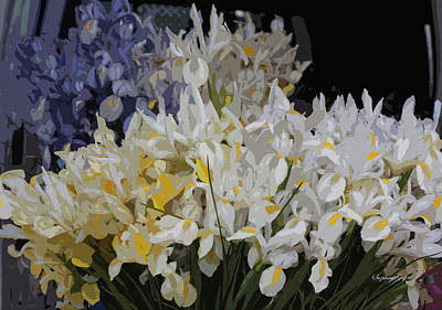 Photograph - Incredible Irises - Cutout by Suzanne Gaff