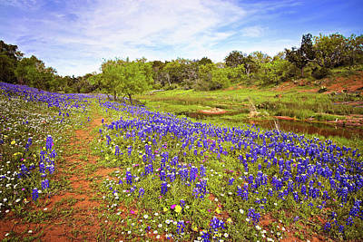Photograph - Incredible Wildflowers On The Willow City Loop by Lynn Bauer