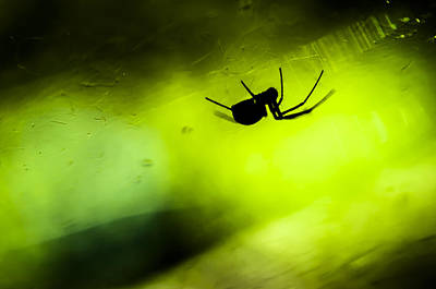 Spidey Photograph - Incy Wincy Spider by Toma Kulaksazov