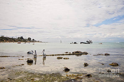 Photograph - Indented Head by Linda Lees