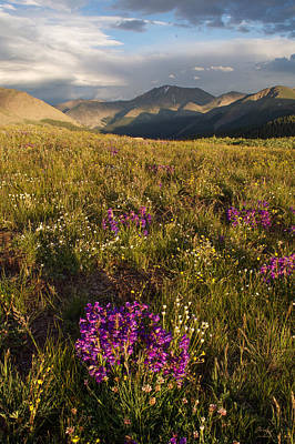 Photograph - Independence Pass  by Aaron Spong
