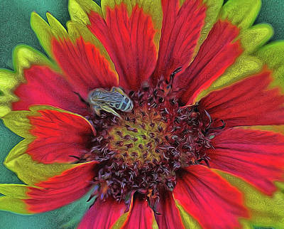Photograph - Indian Blanket by Allen Beatty
