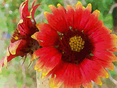 Digital Art - Indian Blanket Flowers by Shelli Fitzpatrick