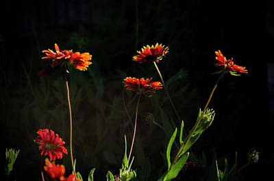 Photograph - Indian Blanket by Greg Reed