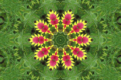 Photograph - Indian Blanket Kaleidoscope by Robyn Stacey