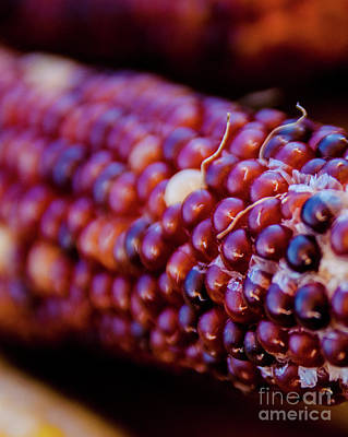 Photograph - Indian Corn 2 by Andrea Anderegg