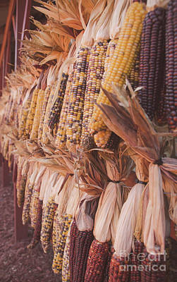 Photograph - Indian Corn 4 by Andrea Anderegg
