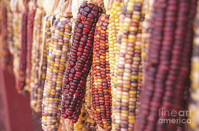 Photograph - Indian Corn 5 by Andrea Anderegg