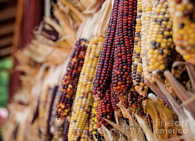 Photograph - Indian Corn 6 by Andrea Anderegg
