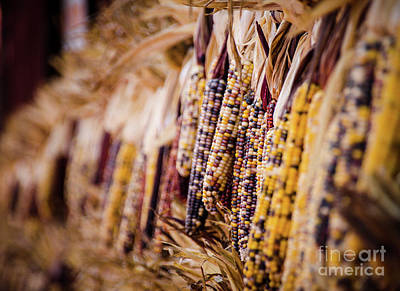 Photograph - Indian Corn by Andrea Anderegg