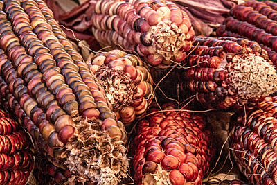 Indian Corn Art Print by Bill Gallagher