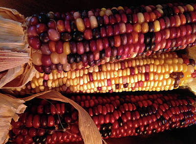 Photograph - Indian Corn by Connie Fox