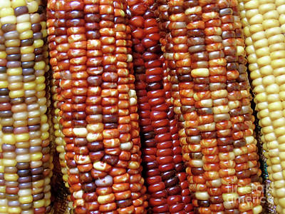 Photograph - Indian Corn by D Hackett