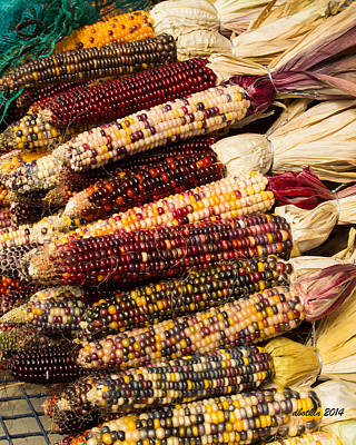 Photograph - Indian Corn by Dick Botkin