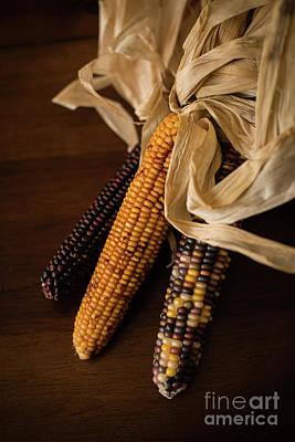 Indian Corn Harvest Print by Taylor Martinsen