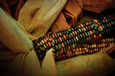 Photograph - Indian Corn by Joseph Hollingsworth