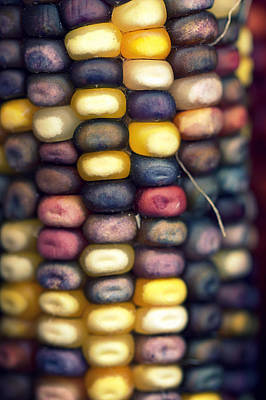 Photograph - Indian Corn by Joseph Skompski