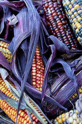 Photograph - Indian Corn by Sharon Foelz