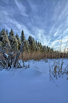 Photograph - Indian Grass And Snow Covered Pines 3 by Bonfire Photography