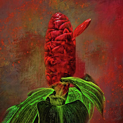 Photograph - Indian Head Ginger Exotic by HH Photography of Florida