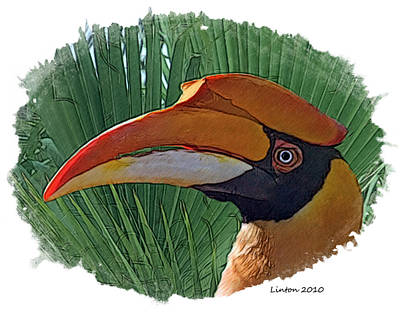 Hornbill Digital Art - Indian Hornbill by Larry Linton