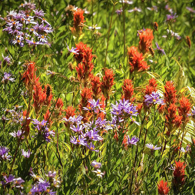 Photograph - Indian Paintbrush And Asters by Belinda Greb
