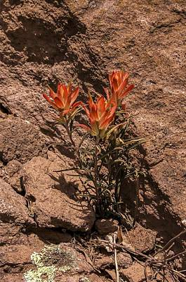Photograph - Indian Paintbrush At Bandelier by NaturesPix