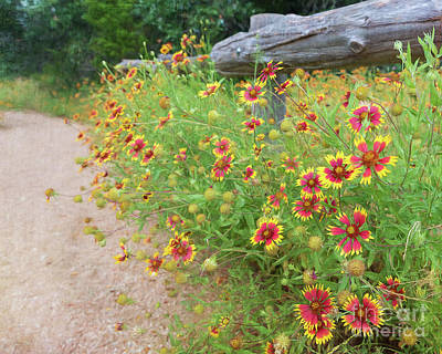 Photograph - Indian Paintbrush by Cathy Alba