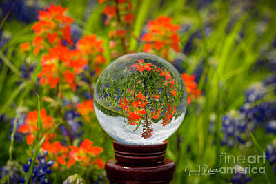 Photograph - Indian Paintbrush Crystal Ball by John Roberts