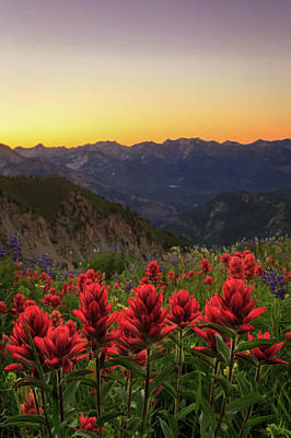 Photograph - Indian Paintbrush On Timp. by Johnny Adolphson