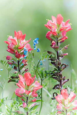 Photograph - Indian Paintbrush Dab Of Blue by Robert Frederick
