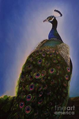 Indian Peacock Original