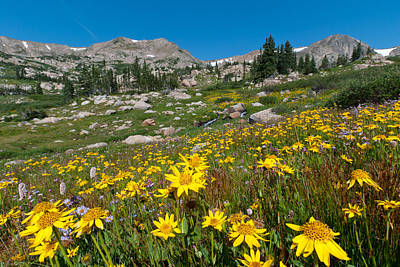 Photograph - Indian Peaks Summer Wildflowers by Cascade Colors