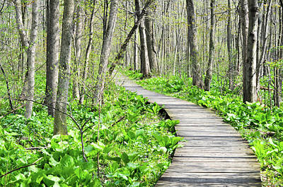 Indiana Dunes Great Green Marsh Boardwalk Art Print