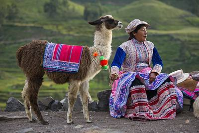 Llama Photograph - Indigena by Christian Heeb