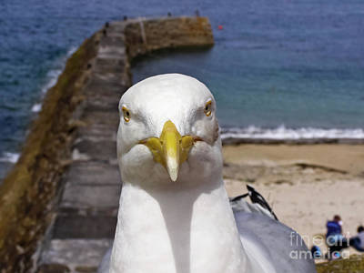 Photograph - Indignant Seagull by Terri Waters
