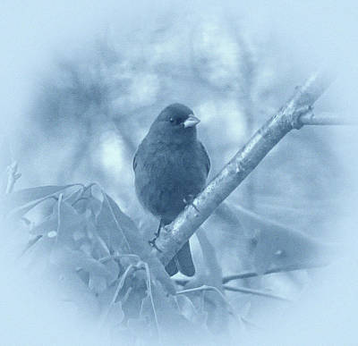 Art Print featuring the photograph Indigo Bunting In Blue by Sandy Keeton