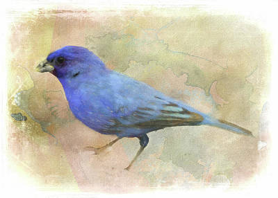 Digital Art - Indigo Bunting by Rusty R Smith