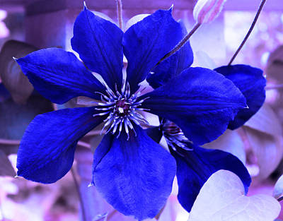 Art Print featuring the photograph Indigo Flower by Milena Ilieva