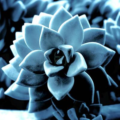 Pyrography - Indigo Succulent- Art By Linda Woods by Linda Woods