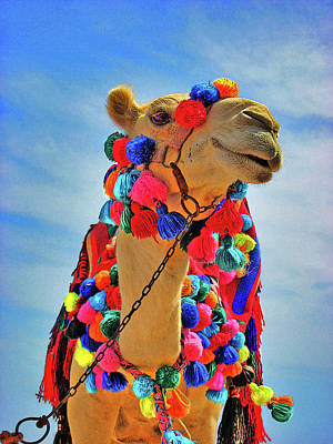 Individual Male. Beautiful Camel. Original by Andy Za